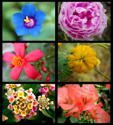 "Collages ... "" colorful - refresh - white """